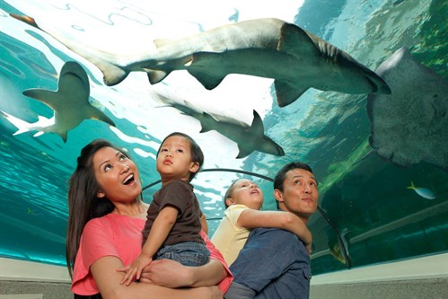 Family Day at SEA LIFE (1)